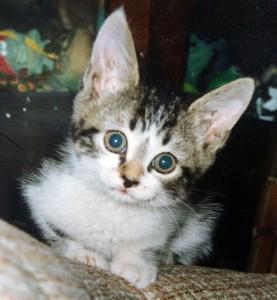 Mauser as a kitten